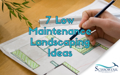 7 Low Maintenance Landscaping Ideas