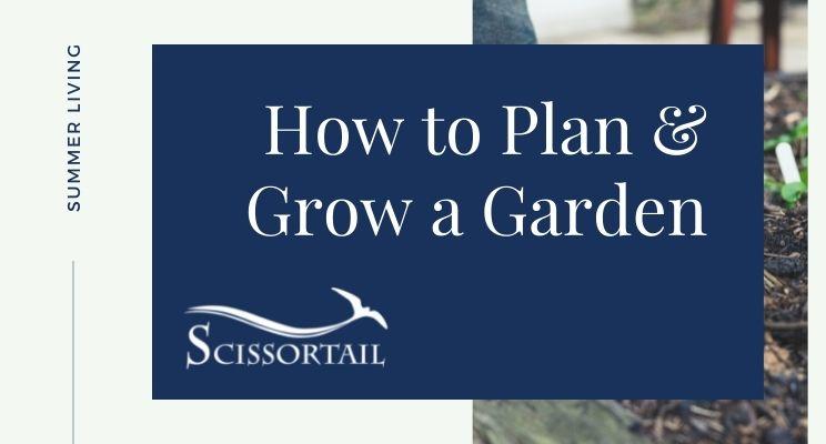 How to Plan & Grow a Garden